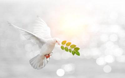 Solusi Spiritual untuk Terorisme