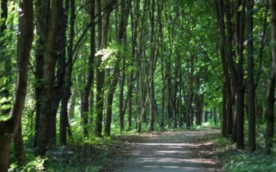 Bhagavad Gita 03.11-16